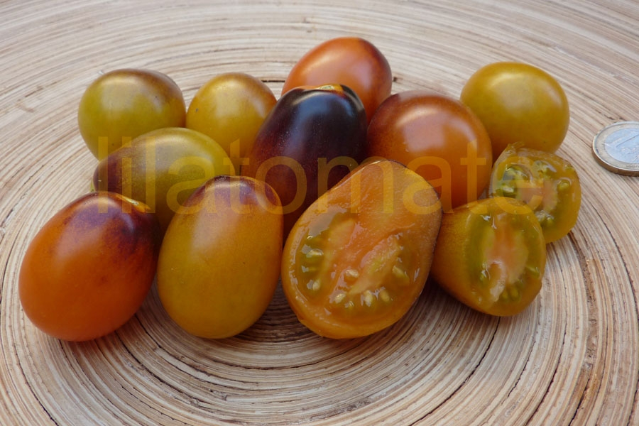 Tomate 'Indigo Kumquat' Saatgut