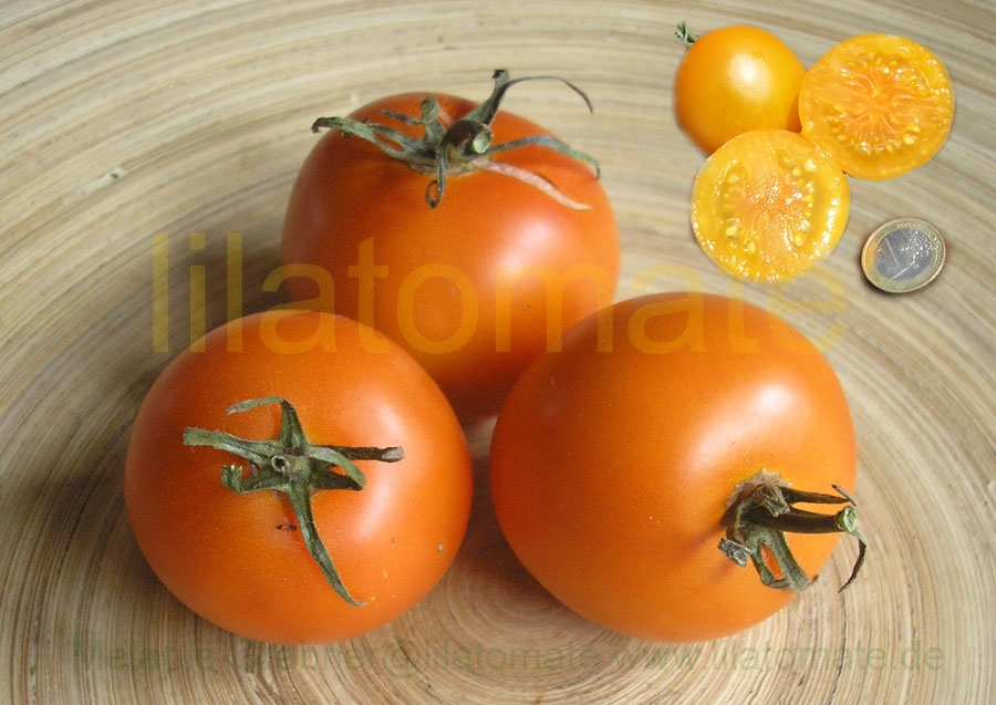Tomate 'Auriga' Saatgut