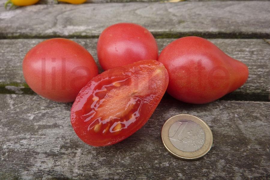 Tomate 'Balerinka' Saatgut