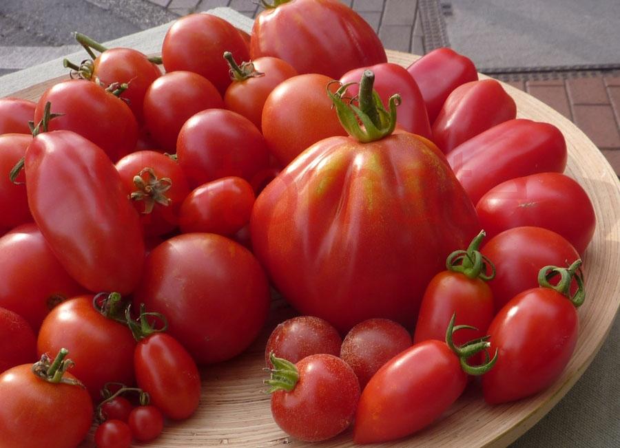 Tomate Sortenmischung 'Rote Klassiker' Saatgut