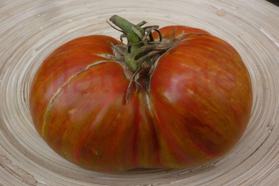 Tomate 'Berkely Tie Dye Heart' Saatgut