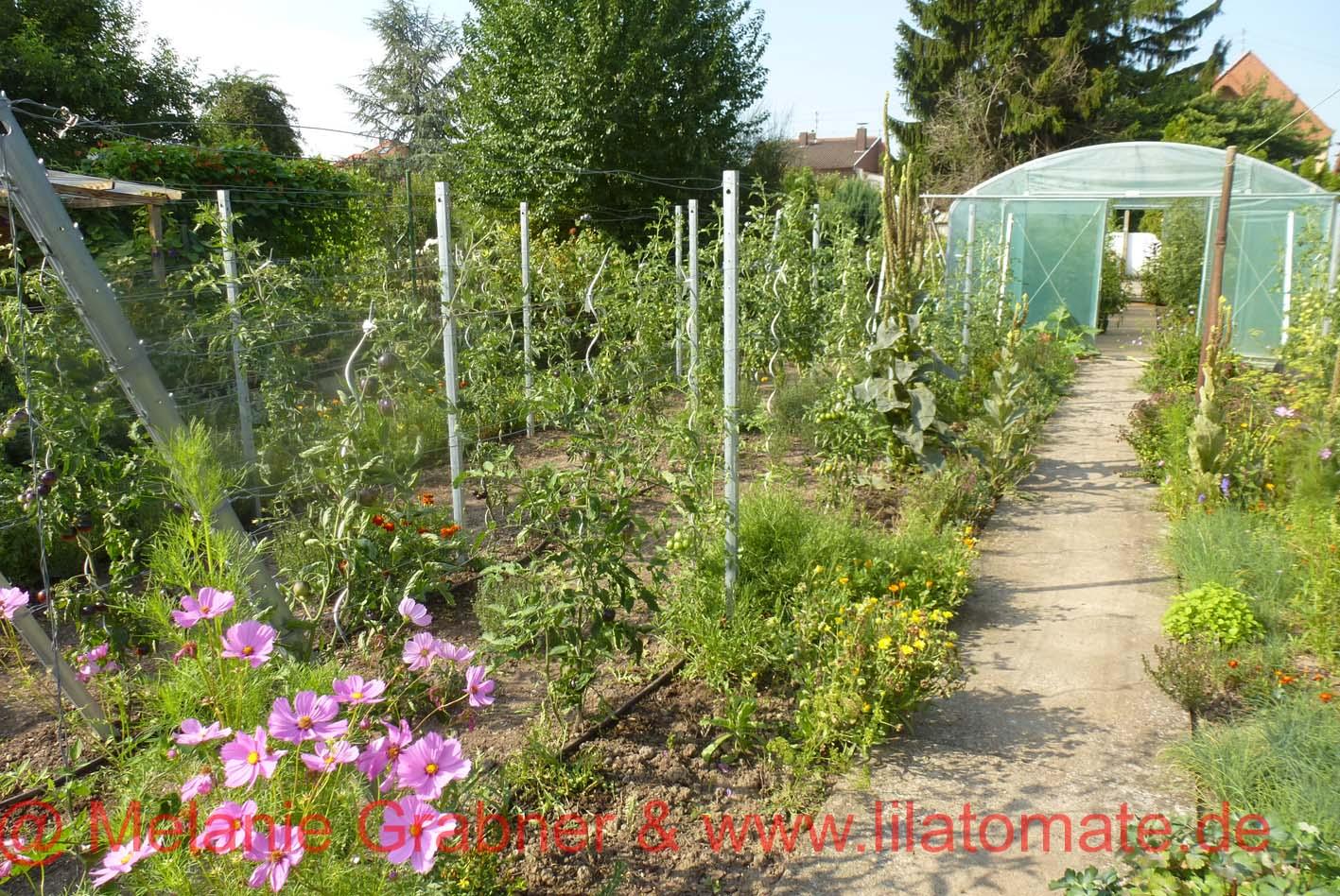 0 Gartenkurs Tomatenliebe: Pflanzzeit Samstag 7 April 18 von 10 -14.00 Uhr