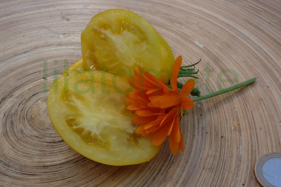 Tomate 'Andenhorn, gelb (Arbeitstitel)'