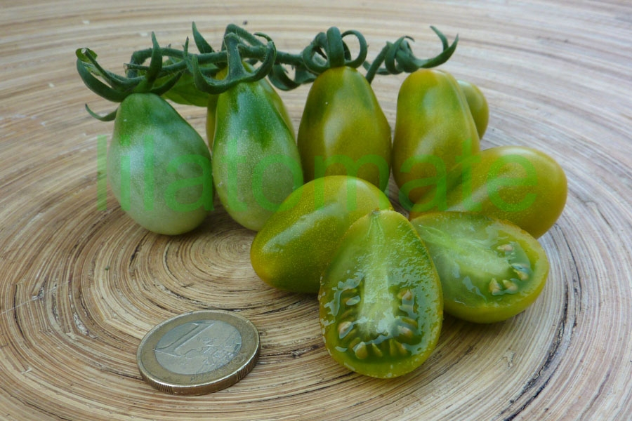 Tomate 'Green Pear'