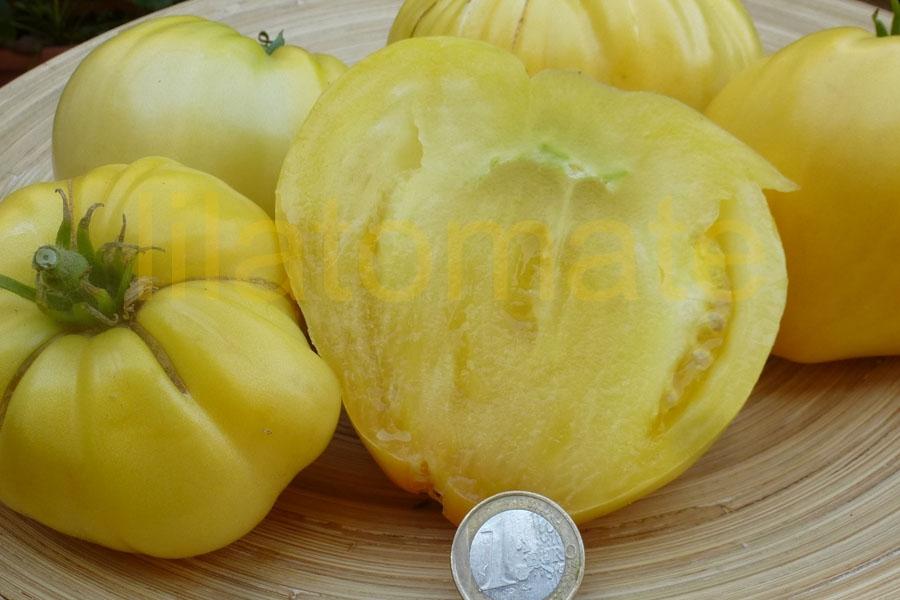 Tomate 'Weiße Ochsenherz'