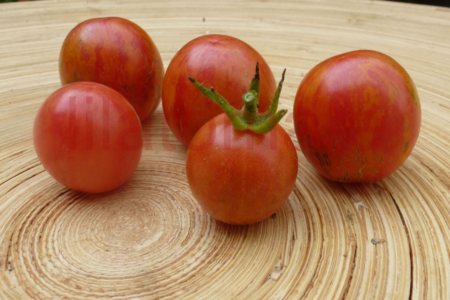 Tomate 'Cherriots of fire'