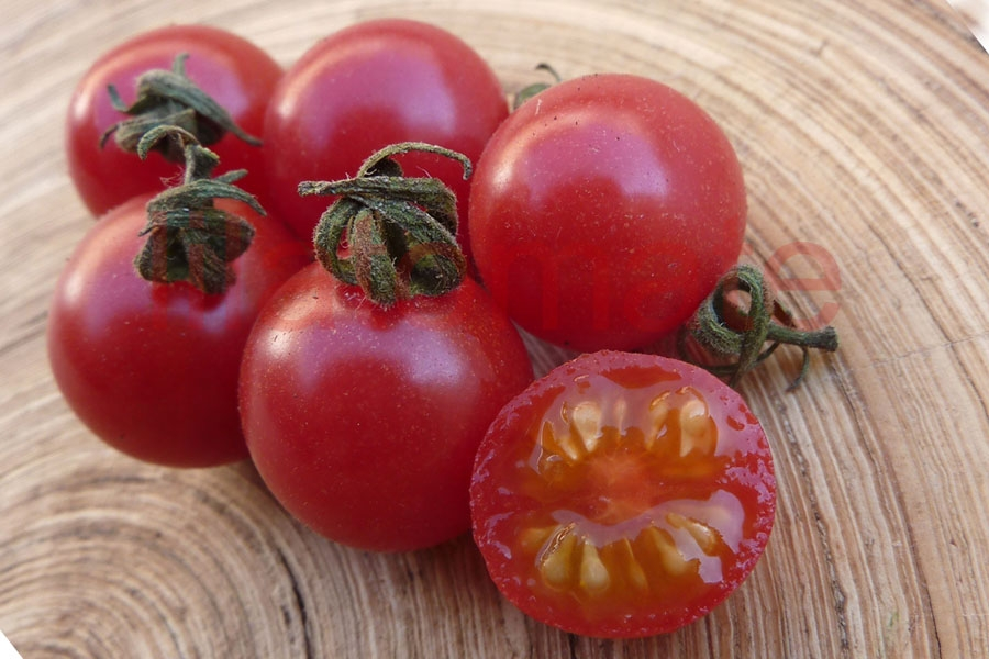 Tomate 'Wildtomate, rot, rund' (Arbeitstitel)