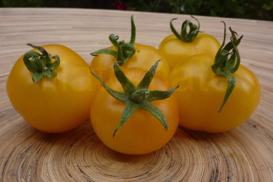 Tomate 'Gelbe Königin' Saatgut