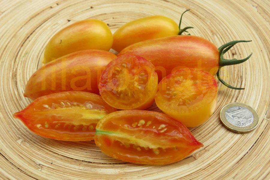 Tomate 'Artisan Blush Tiger' Saatgut