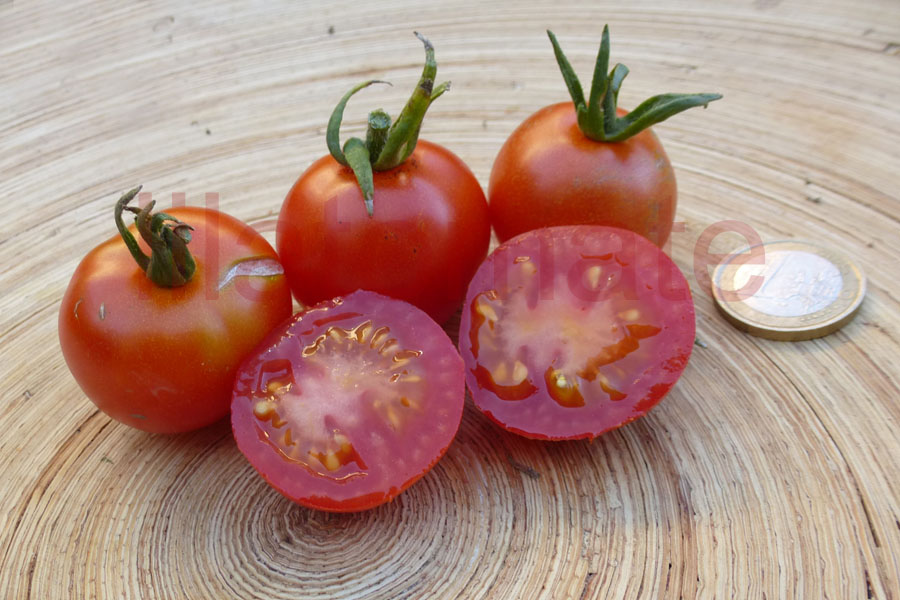 Tomate 'Cerise, rot 18 19' AT