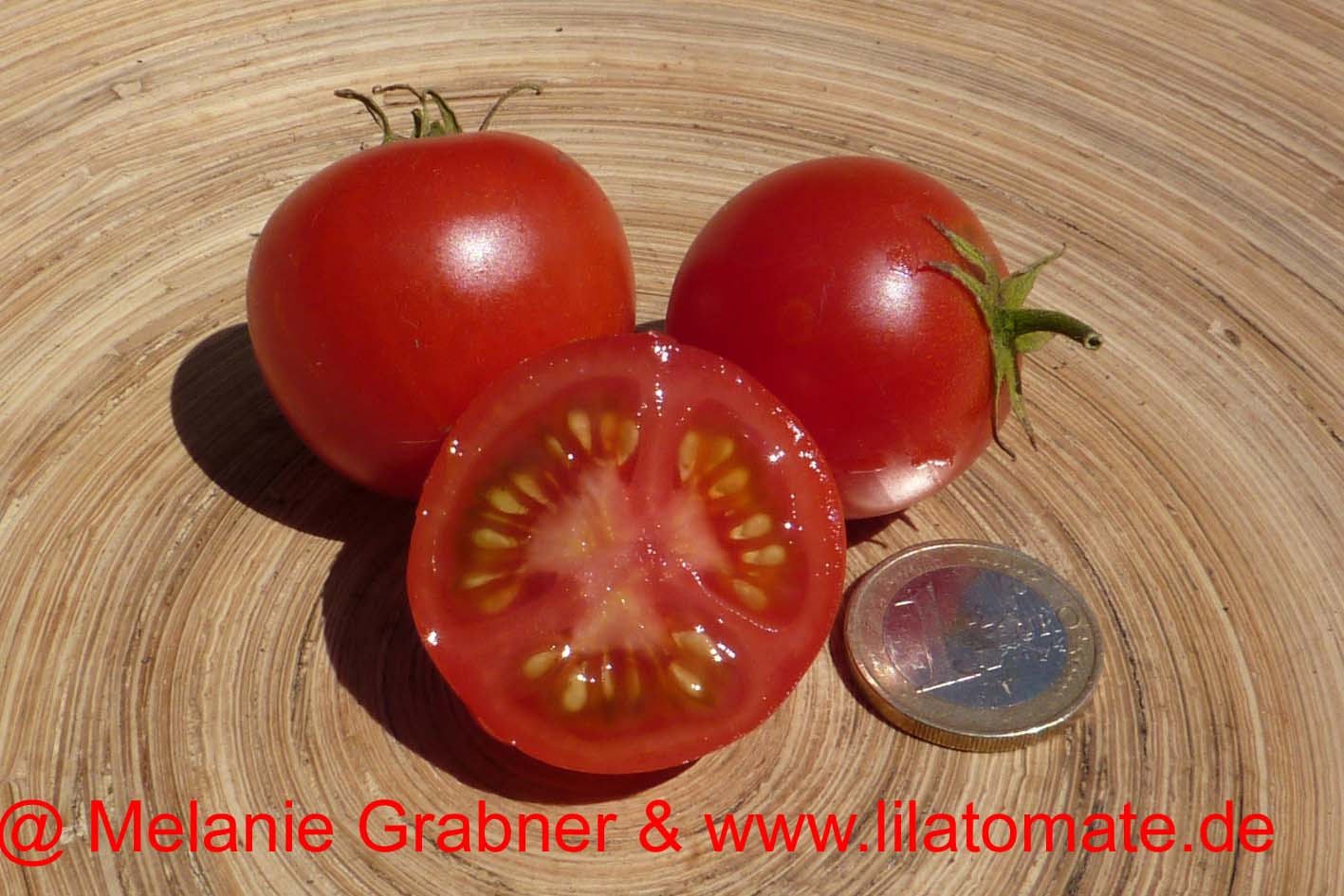 Tomate '42 Days, Mainz' Saatgut