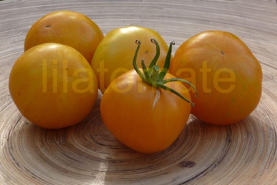 Tomate 'Yellow Zebra'