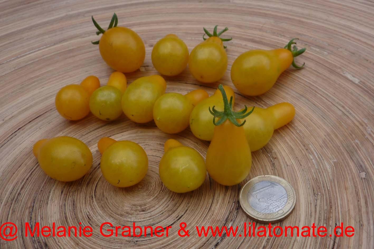 Tomate 'Gelbes Birnchen' Saatgut