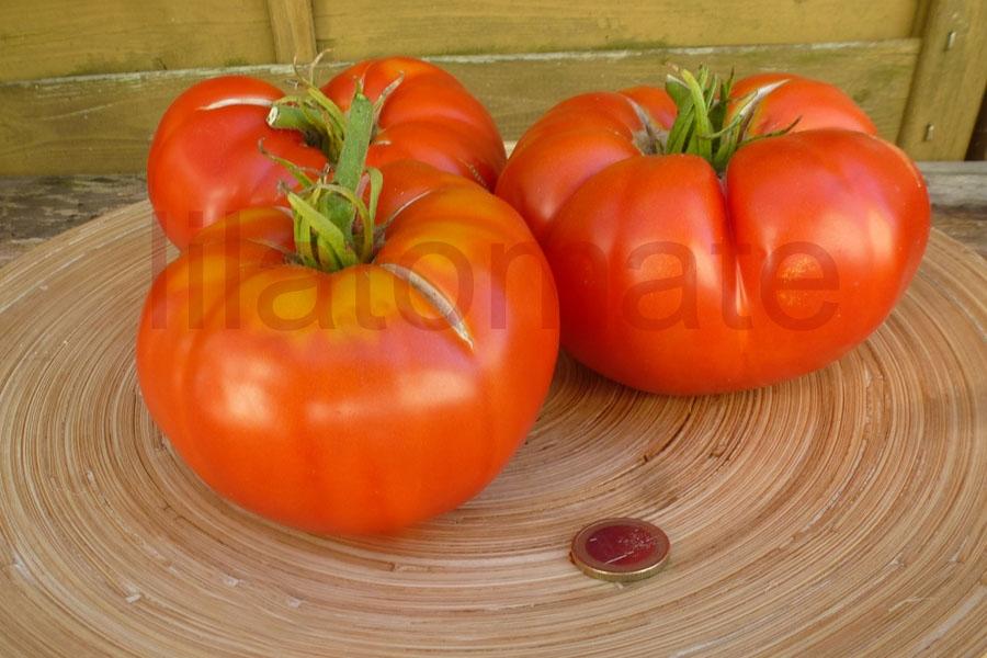 Tomate 'Bulgarische Fleischtomate, rot'