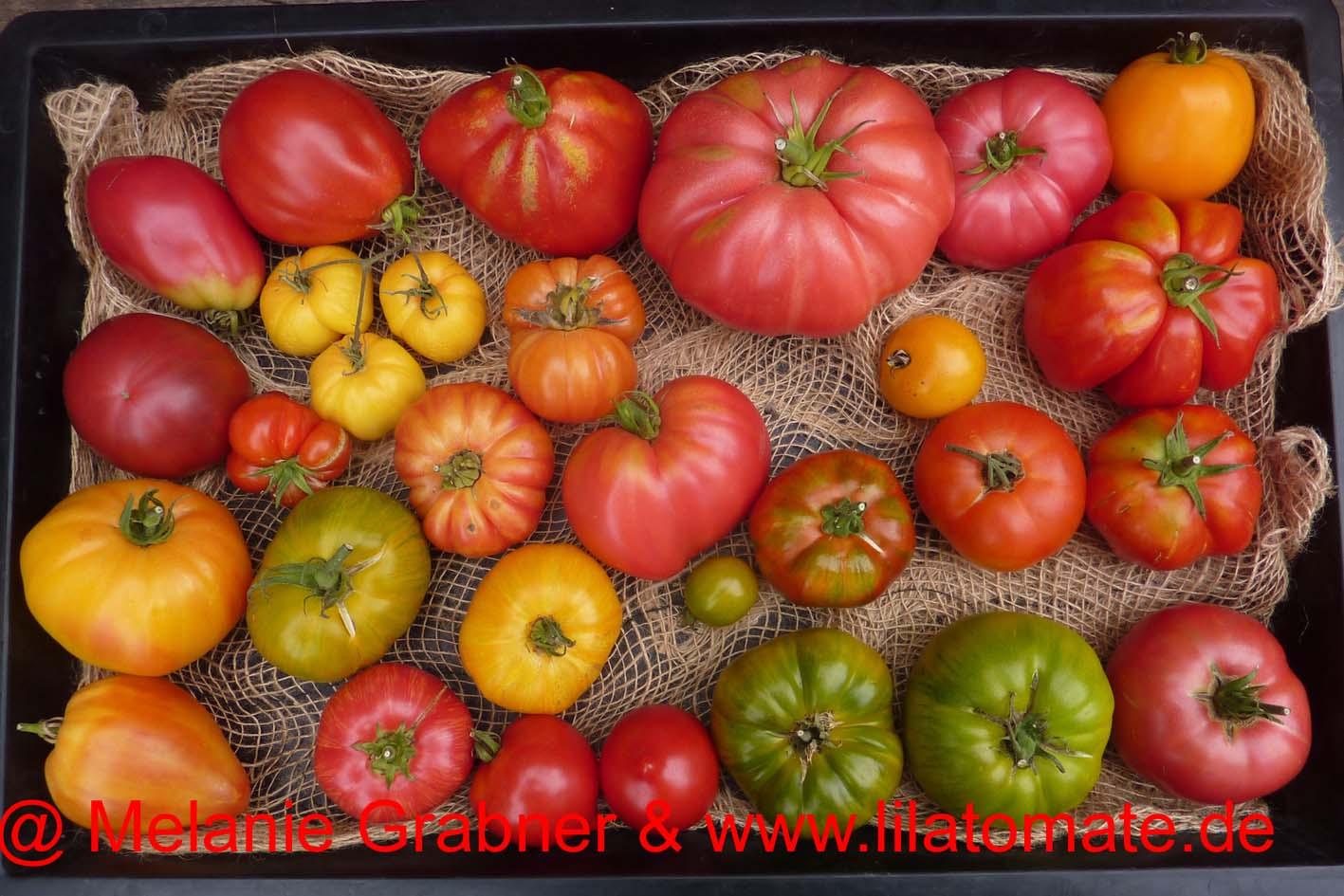 Tomate Sortenmischung 'Fleischtomaten, bunt' Saatgut