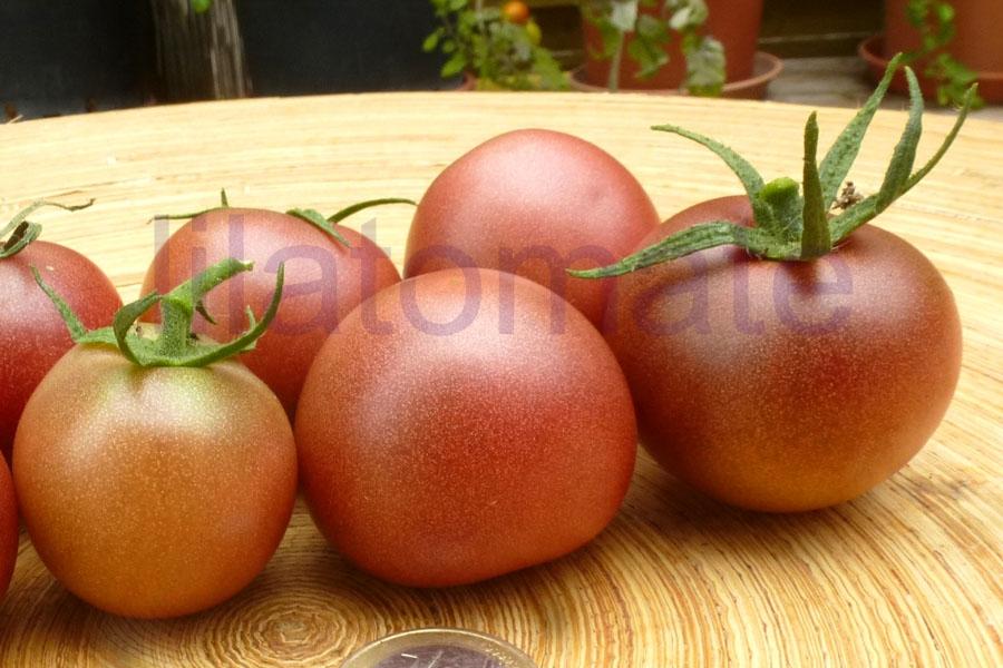 Tomate 'David, große Pflanze' Saatgut