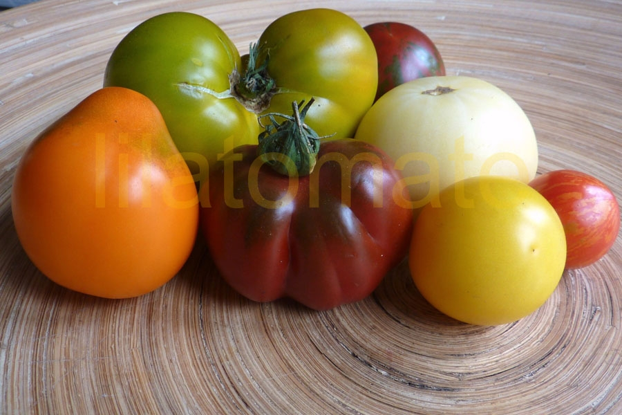 Tomate Sortenmischung 'Mittelgroße Tomaten' Saatgut
