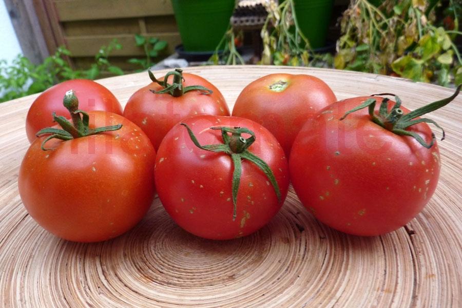 Tomate 'Hellfrucht'
