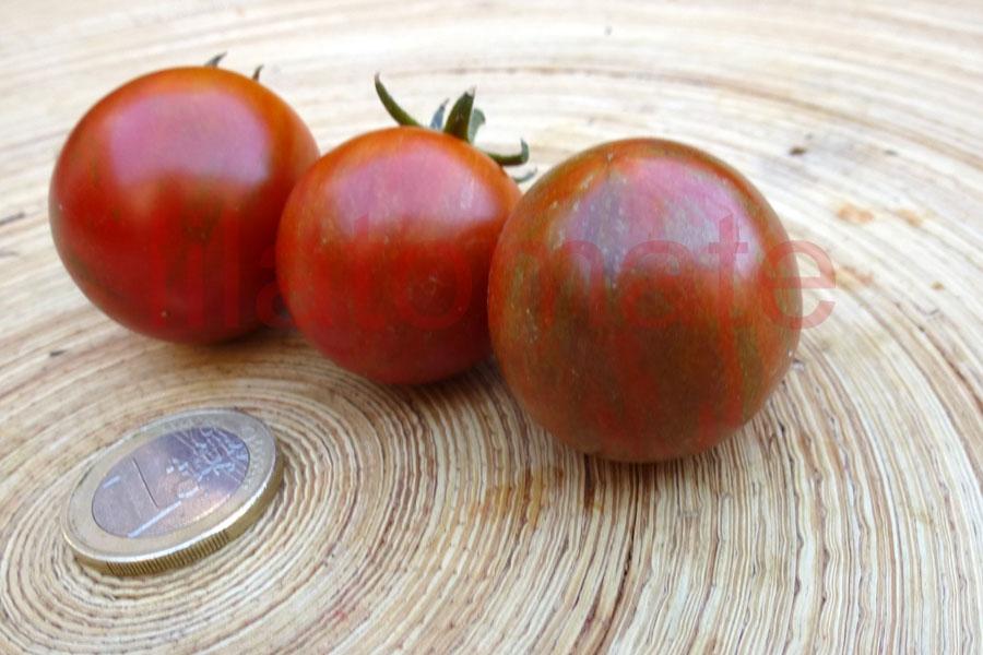 Tomate 'Safari' Saatgut