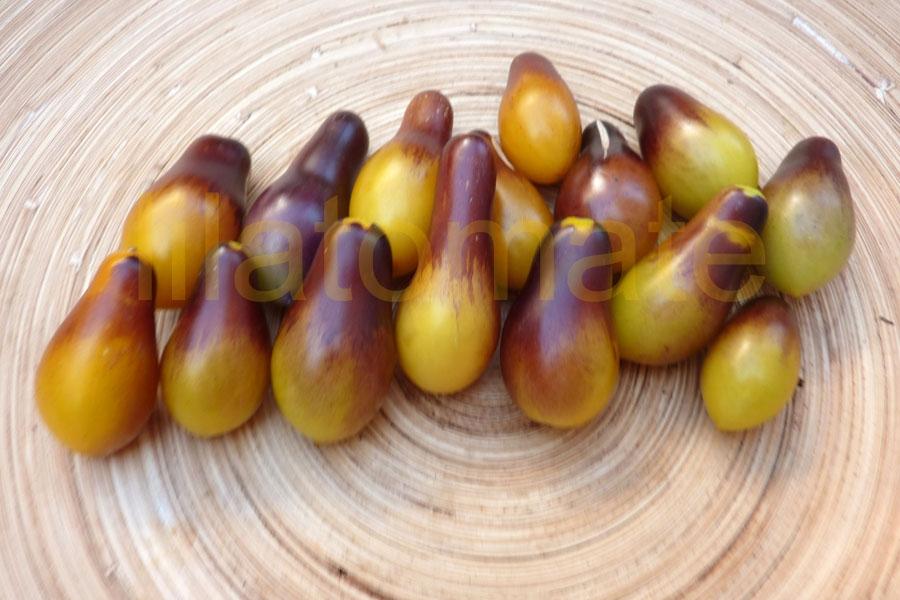 Tomate 'Indigo Kumquat, birnenförmig'