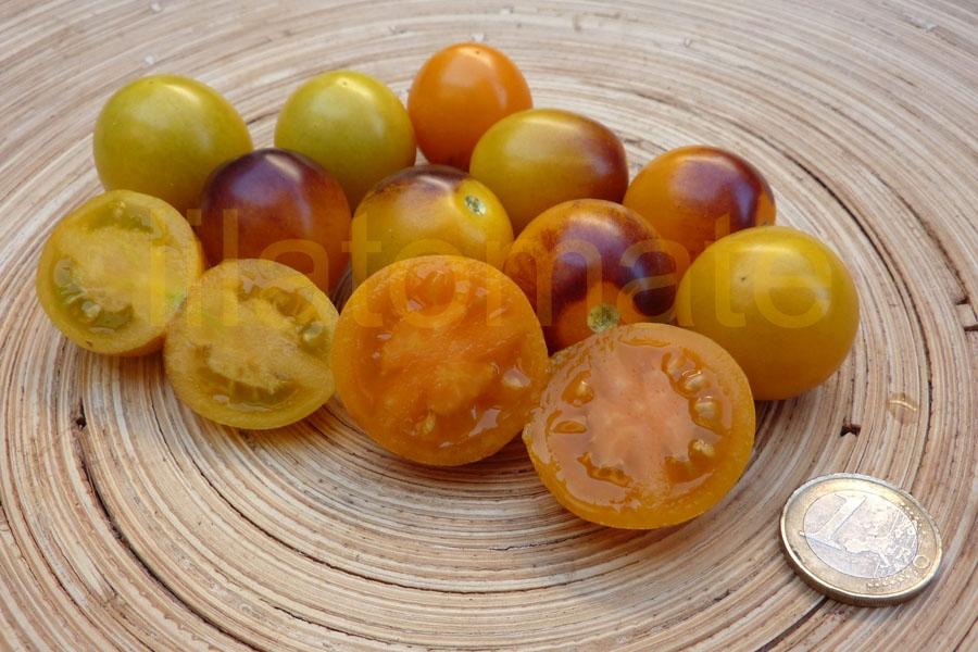 Tomate 'Indigo Kumquat, rund' Saatgut