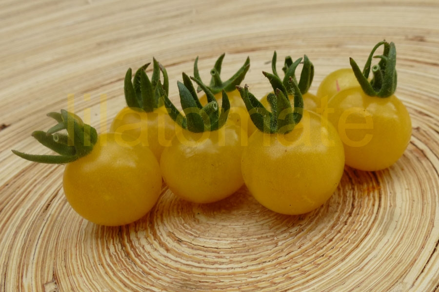 Tomate 'Bianca, Weiße Wildtomate'