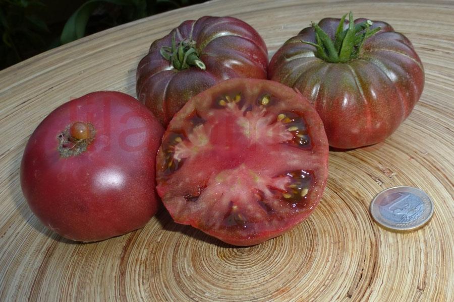 Tomate 'Purpur Kalebasse, lila' Saatgut