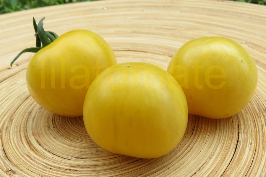 Tomate 'Yellow Vernisage'