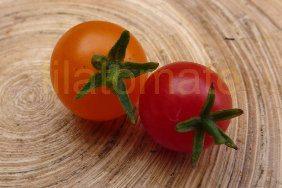 Tomate 'Johannisbeertomate, gelb'