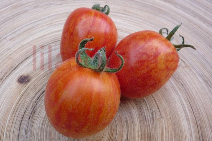 Tomate 'Velour striped' Saatgut