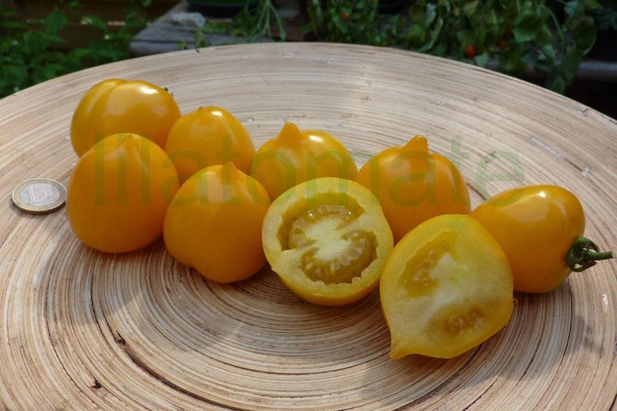 Tomate 'Anna Hermann' Saatgut