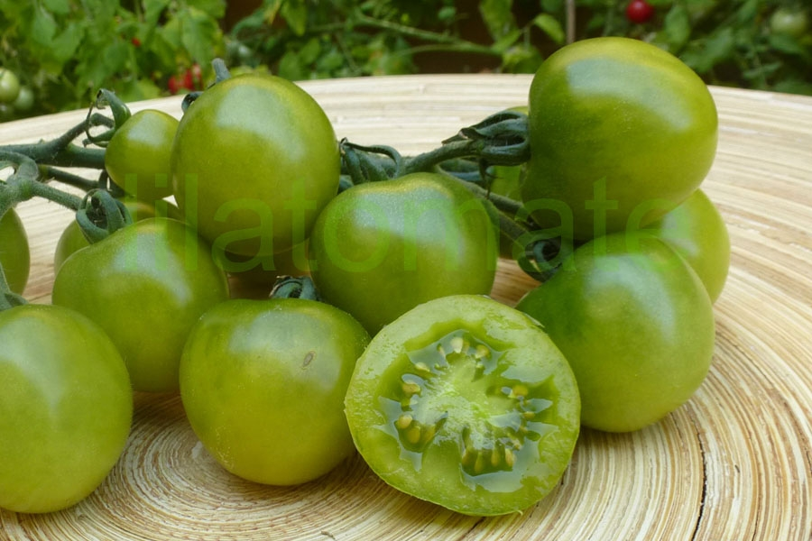 Tomate 'Green Doc'
