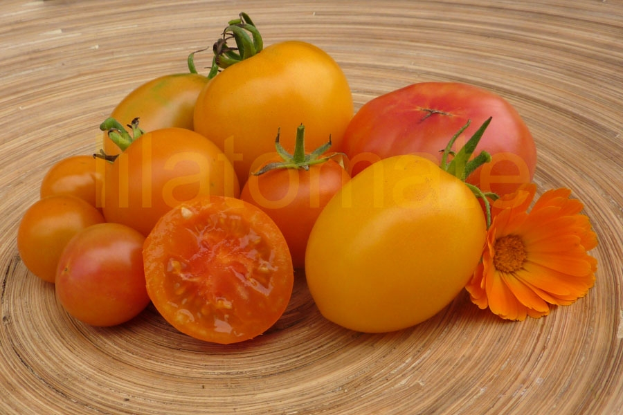 Tomate Sortenmischung 'Gelbe Tomaten' Saatgut