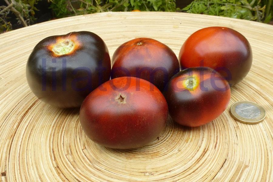 Tomate 'Clackermans Blue Berrry'