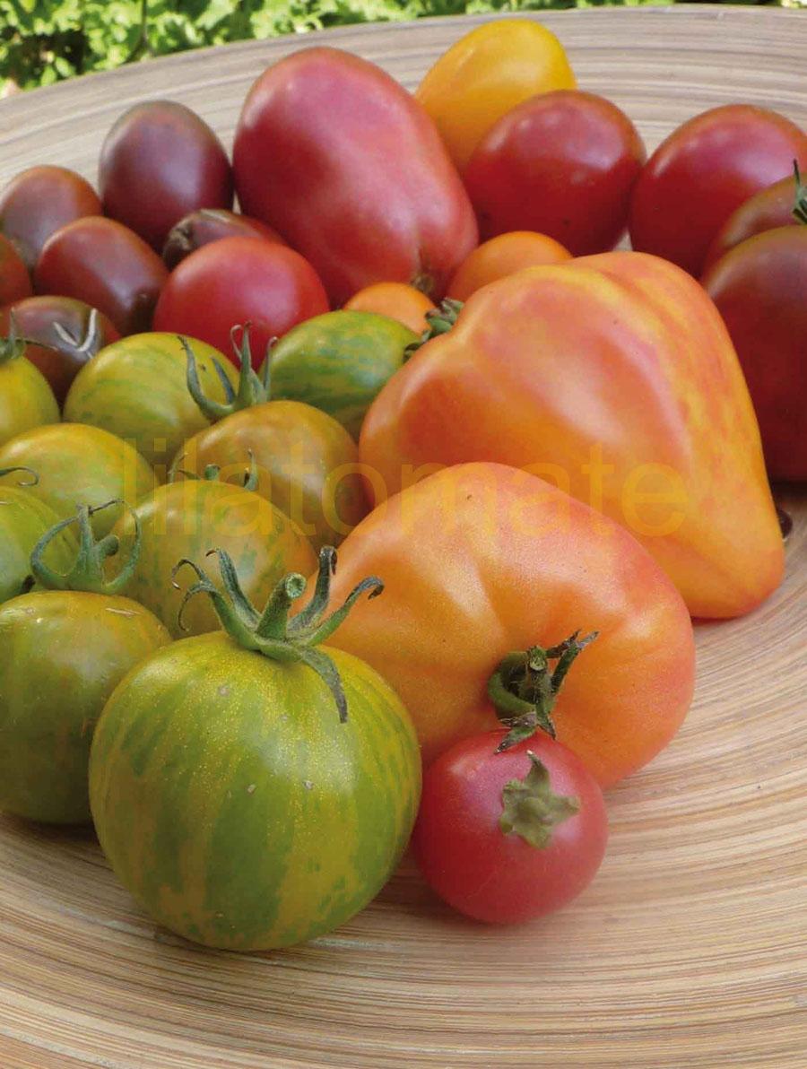 Tomate Sortenmischung 'Gestreifte Schönheiten' Saatgut