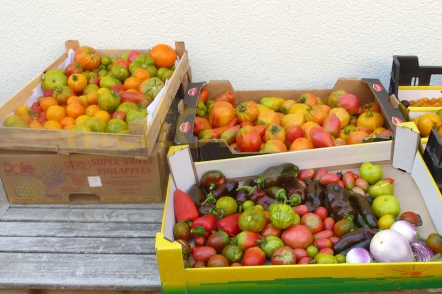 Tomate Sortenmischung 'Kunterbunte Tomaten' Saatgut
