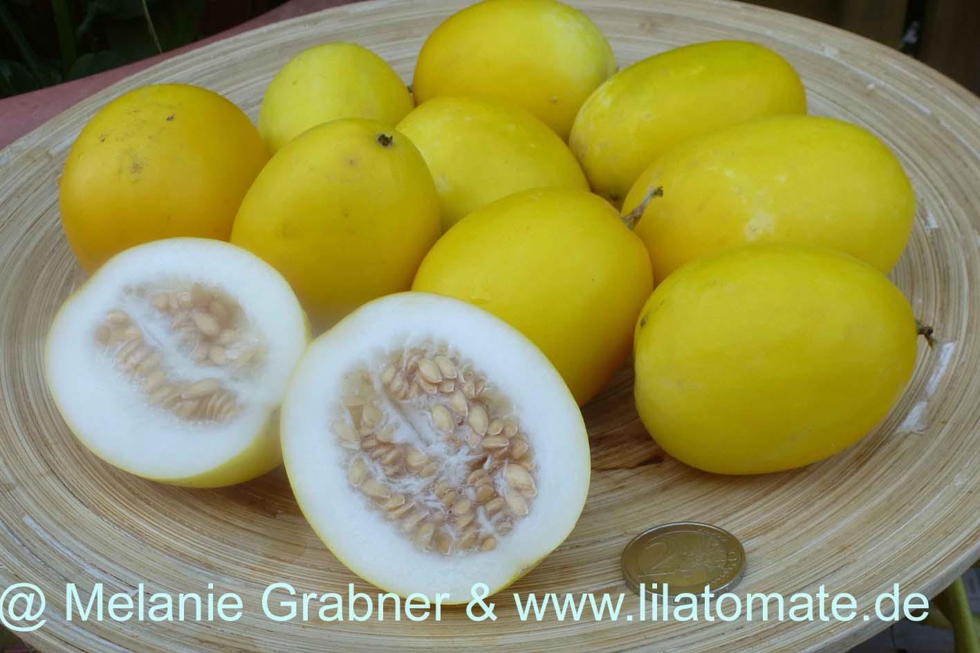 Melone Gartenmelone  'Gelbe Babymelonen' (Arbeitstitel) Saatgut
