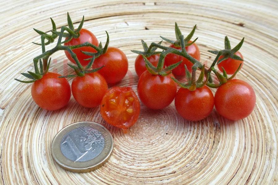 Tomate 'Rote Murmel' Saatgut