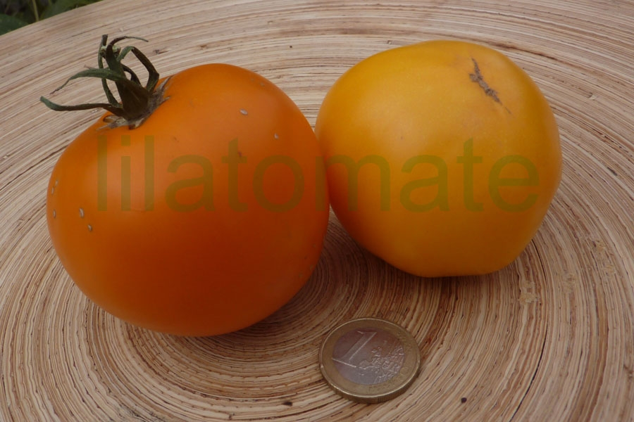 Tomate 'Australian Golden Nugget' Saatgut
