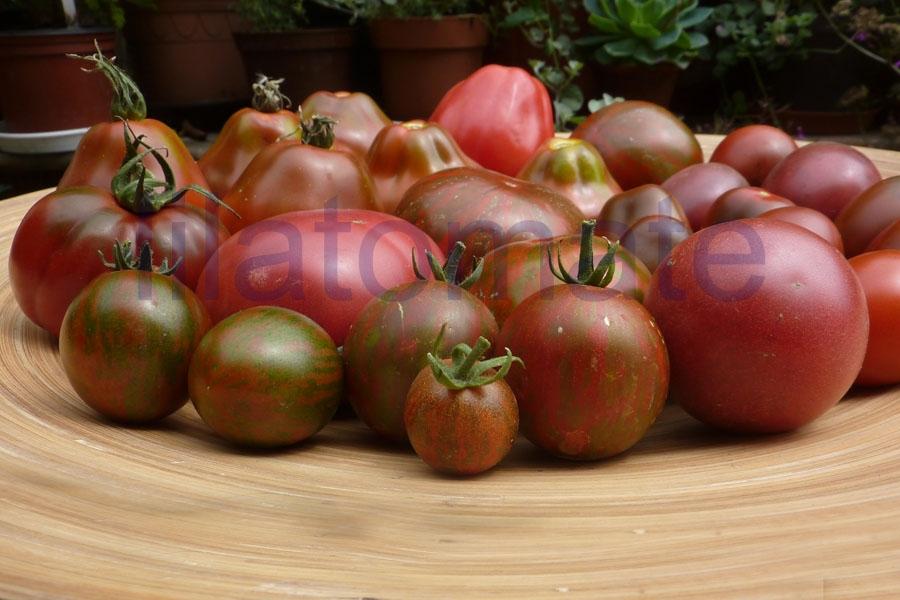Tomate Sortenmischung 'Lila Tomaten' 'Schwarze Tomaten' Saatgut