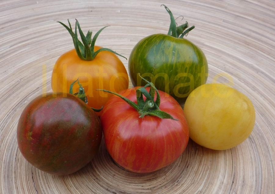 Tomate Sortenmischung 'Zebratomaten' Saatgut