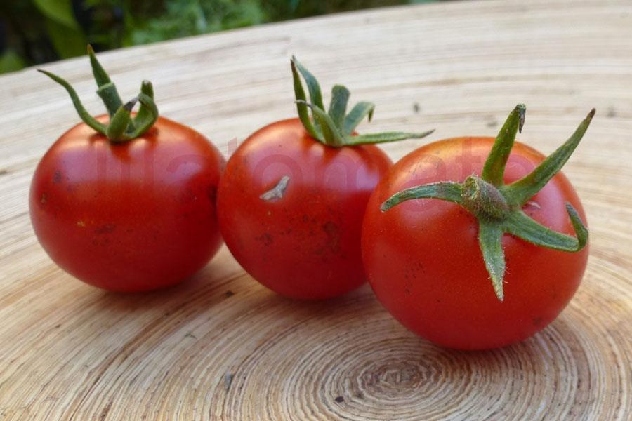 Tomate 'Ernteglück'