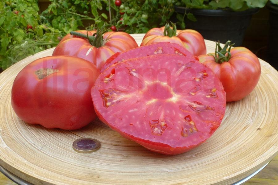 Tomate 'Französische Fleischtomate' Saatgut