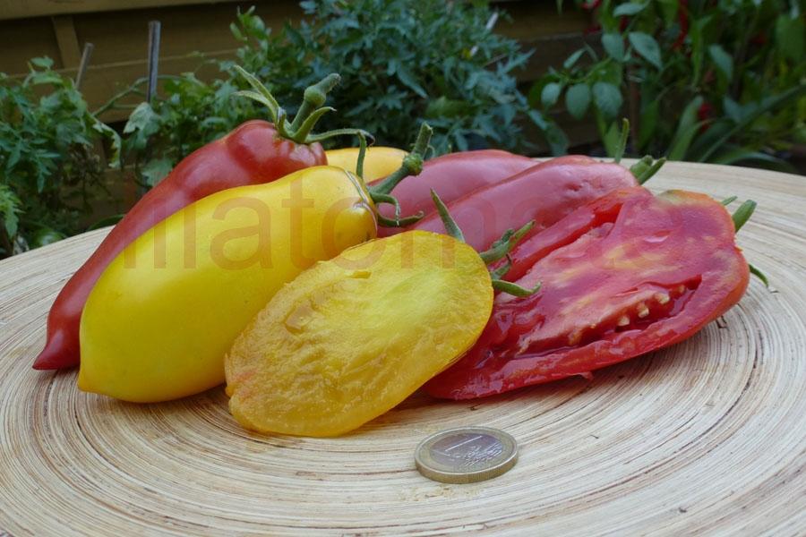 Tomate 'Andenhorn, rot' Saatgut