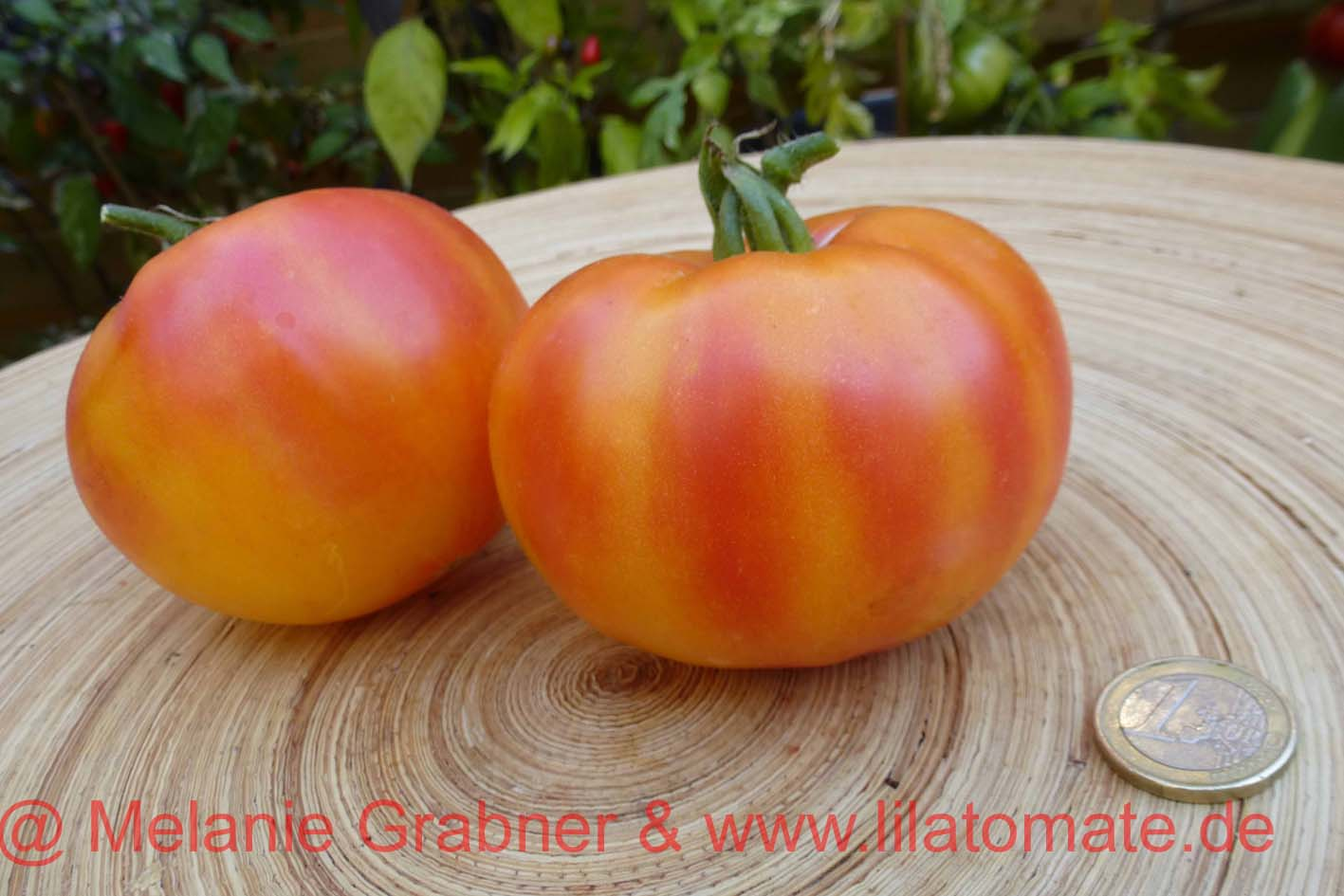 Tomate 'Old Striped German' Saatgut