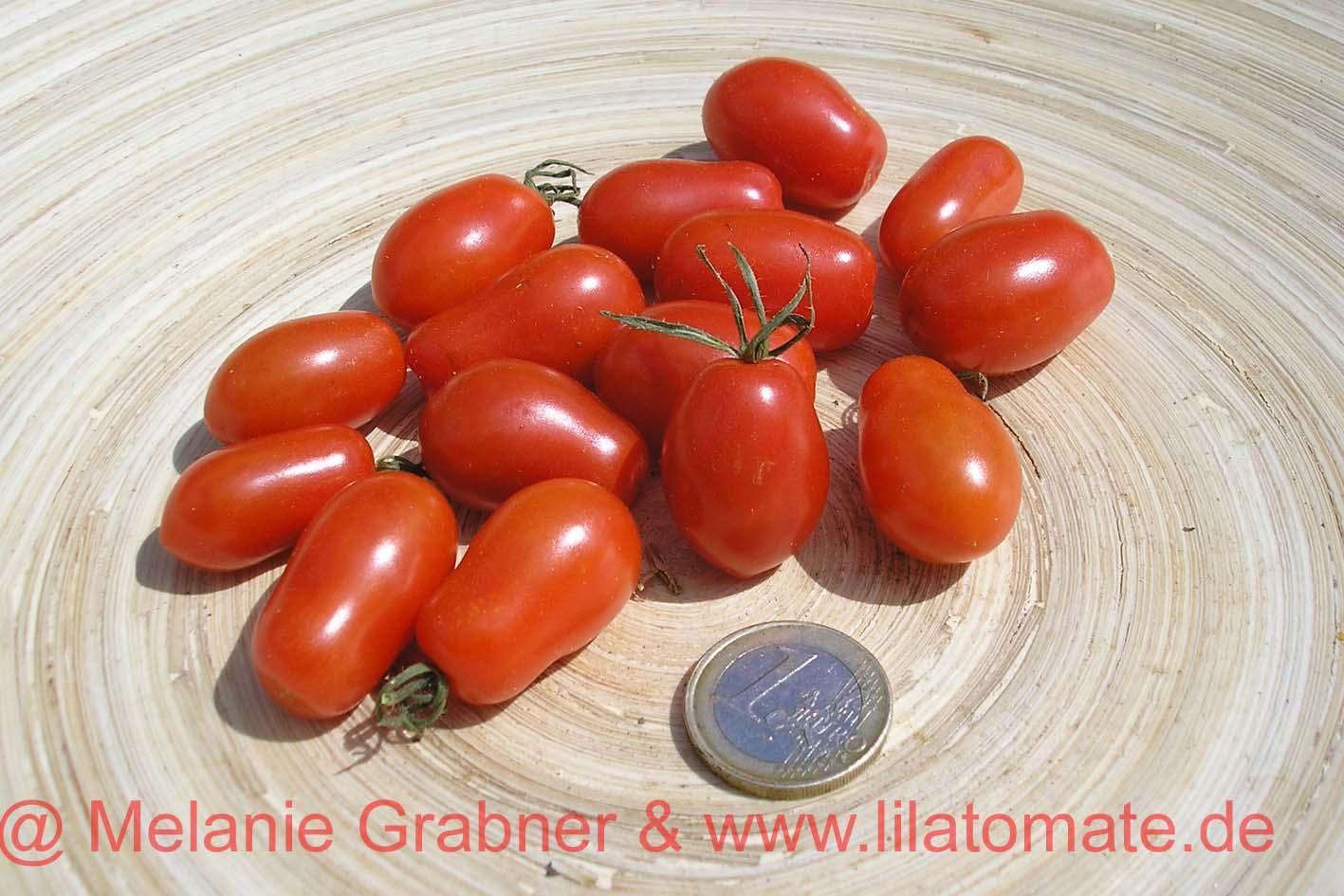 Tomate 'Fioline' (Arbeitstitel)