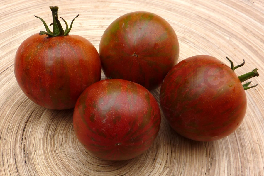 Tomate 'Guernsey Island'