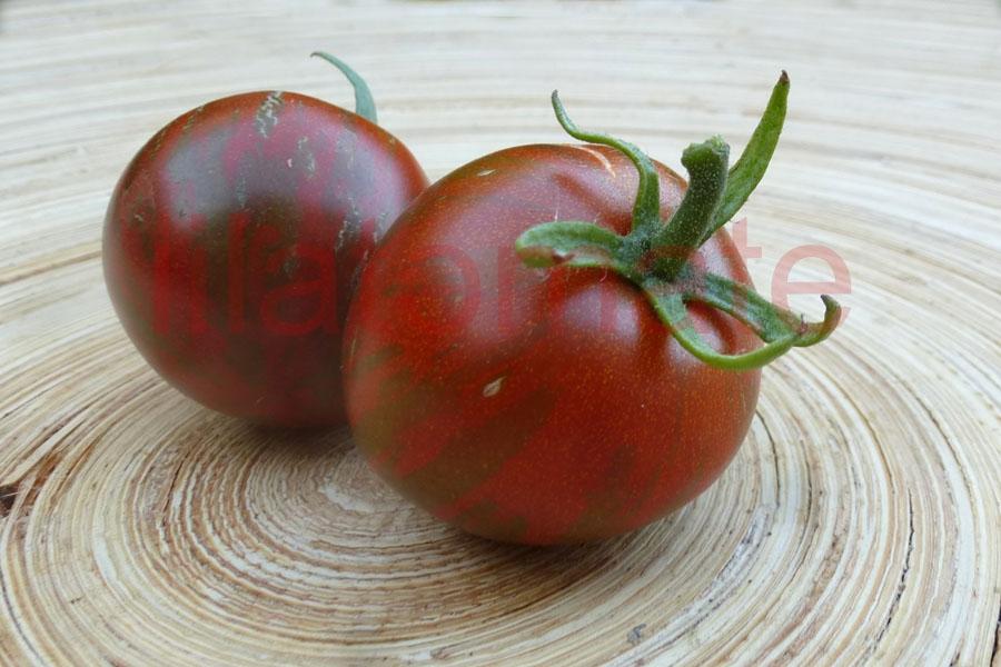 Tomate 'Sir Loin of Zebra' Saatgut