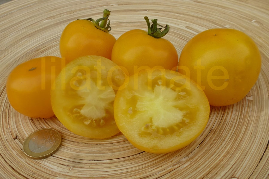Tomate 'Talent, gelb' Saatgut