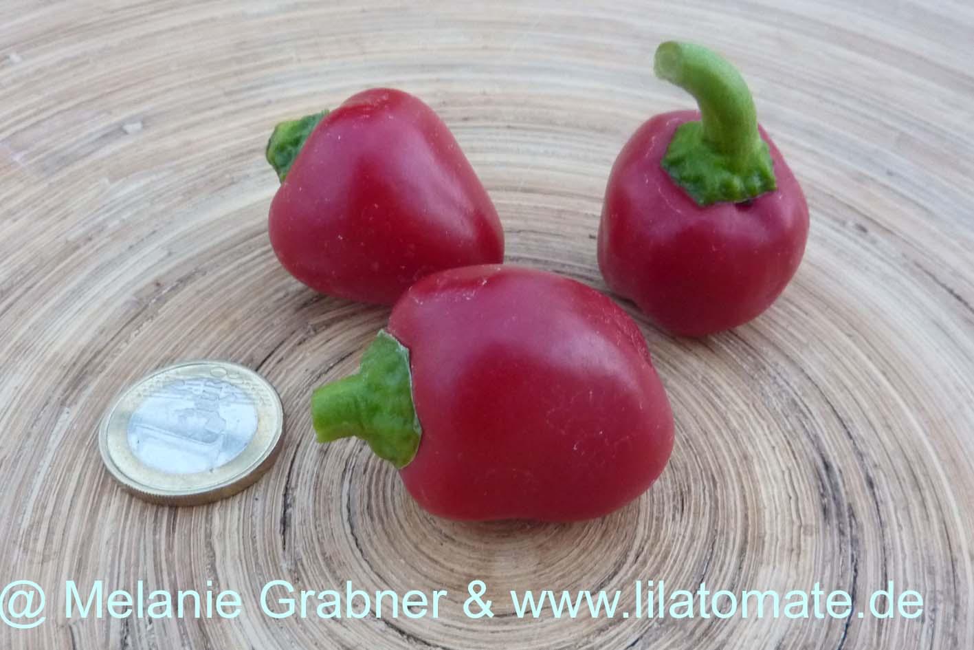 Paprika Sortenmischung 'Rote Paprika' Saatgut